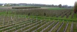 Vignes dans le Val de Loire | DIRECTION REGIONALE DE L'ENVIRONNEMENT, DE L'AMENAGEMENT ET DU LOGEMENT CENTRE-VAL DE LOIRE