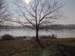 La Loire à Châteauneuf-sur-Loire (Loiret) | DIRECTION REGIONALE DE L'ENVIRONNEMENT, DE L'AMENAGEMENT ET DU LOGEMENT CENTRE-VAL DE LOIRE