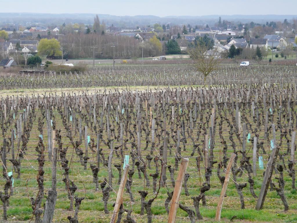 Bourgueil (Indre-et-Loire) | DIRECTION REGIONALE DE L'ENVIRONNEMENT, DE L'AMENAGEMENT ET DU LOGEMENT CENTRE-VAL DE LOIRE