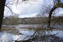 Bras mort de la Loire : la Boire (41) | LELLU (Franck) - DREAL Centre-Val de Loire
