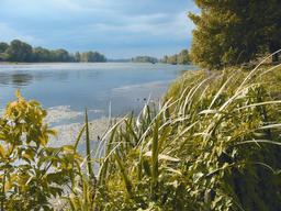 Mégaphorbiaie : végétation d'intérêt européen à hautes herbes en bord de Loire à Briare (Loiret) | OLIVEREAU (Francis)