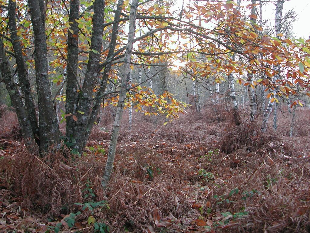 Milieu forestier | DIRECTION REGIONALE DE L'ENVIRONNEMENT, DE L'AMENAGEMENT ET DU LOGEMENT CENTRE-VAL DE LOIRE