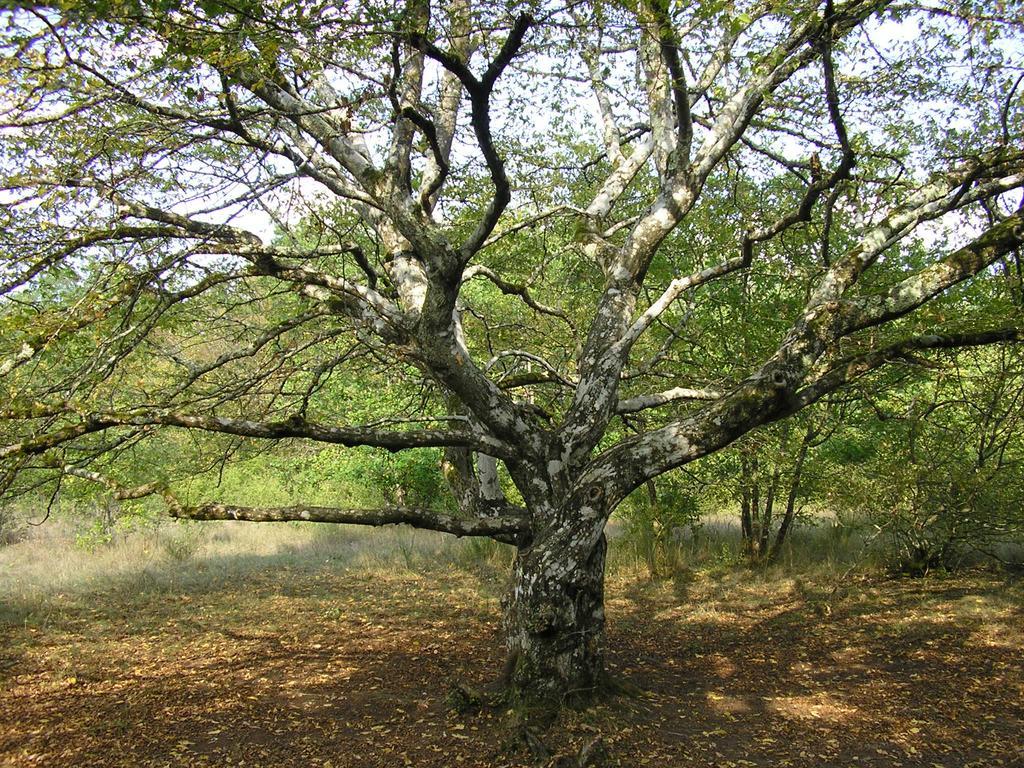 Végétation | DIRECTION REGIONALE DE L'ENVIRONNEMENT, DE L'AMENAGEMENT ET DU LOGEMENT CENTRE-VAL DE LOIRE