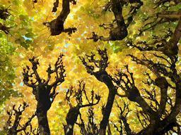 Vue sous l'arbre à Blois | SIMONNEAU (Aurore)
